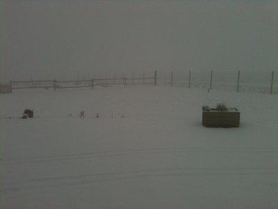 Les dernières nouvelles sous la neige ...