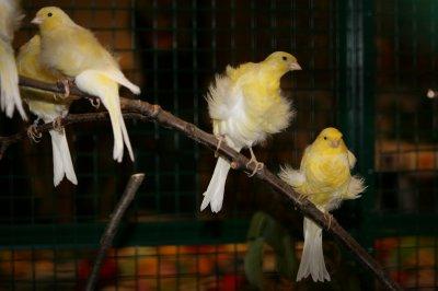 Animalia 2010 , au Palais de Beaulieu Lausanne les 16 et 17 octobre .