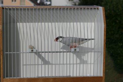 Cages officielles pour la Suisse ( concept Leuenberger .CH )
