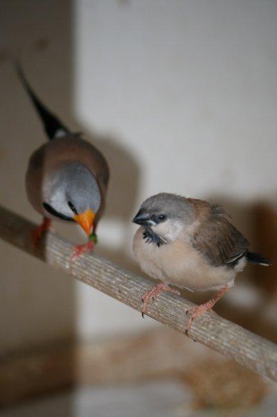 Mes bébés sortie du nid .