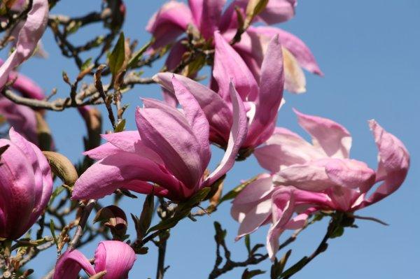 Fleurs de printemps .