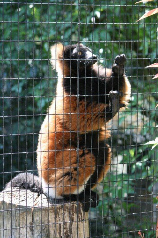 Parc Zoologique Le Domaine des Fauves Fitilieu .