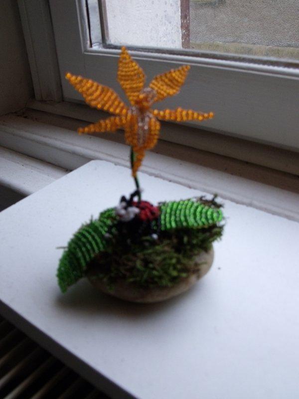 voici une deuxième orchidée orange