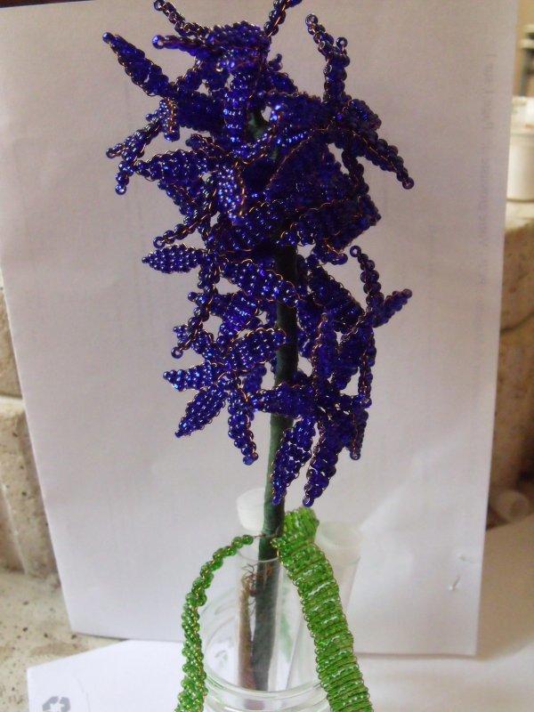 une jacinthe bleue
