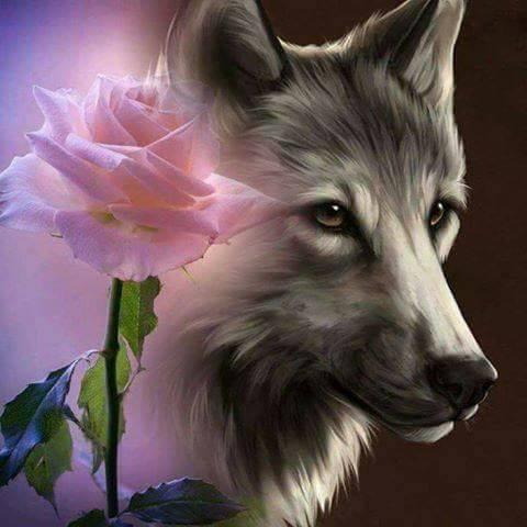 une rose pour un loup