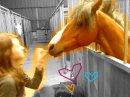 Photo de Wonderfull-Pony