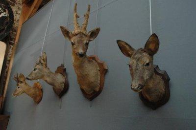 Anti chasse
