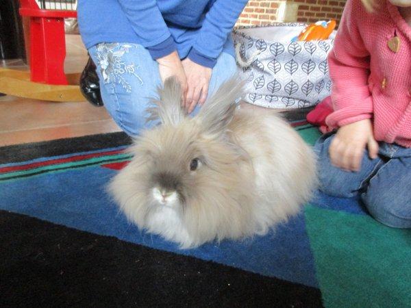Visite de Punky la lapine, merci Sandrine super rencontre pour les petits !