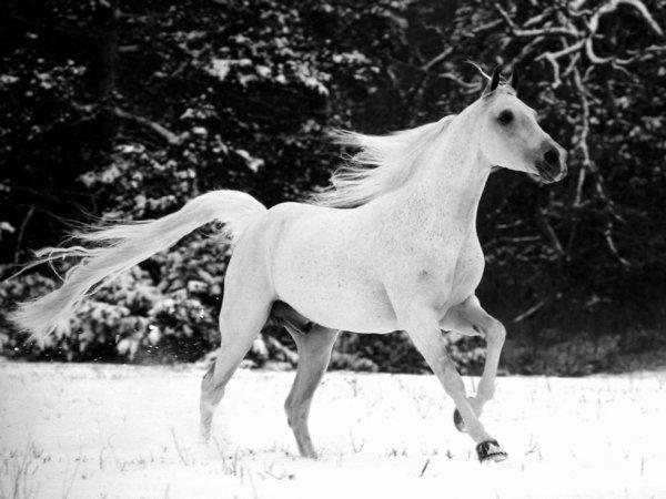 Les chevaux et moi <3