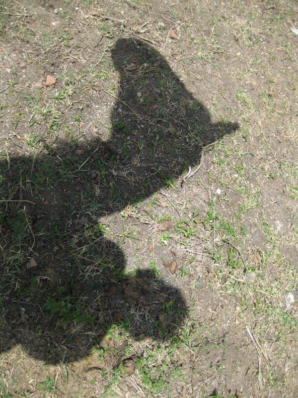 Deviinez. A quii correspondent les ombres !!?? =P