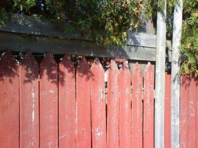 Trouvez le chat, pour 10 kiffs et 5 com's ( pas très net la photo .. )