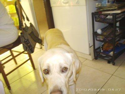 voici mon chien charly