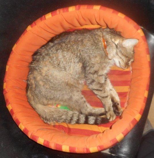 hommage as mémère ma chatte déjà 68 semaine que tu es partie mémère Hommage as mémère une de mais chatte décède