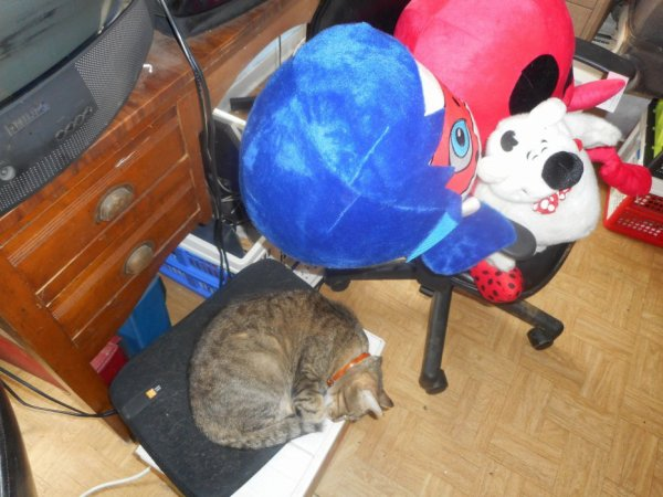 Hommage-Grisette-ma-chat  fête ses 52 ans demain, pense à lui offrir un cadeau.Aujourd'hui à 22:59