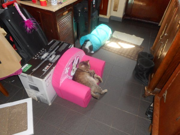 repnse par telehonne de la veterinaire ont doit attendre larrivee du nouveaux chat pour voir sa reaction vu ces son vrai fere
