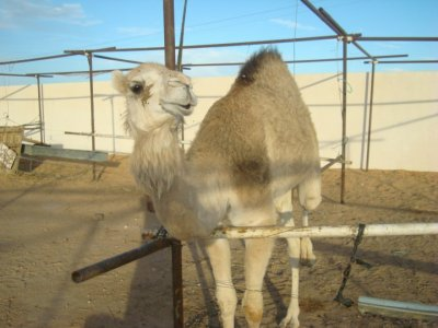 Mes vacances au Maroc (4)