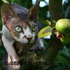 xWonderful-Cats