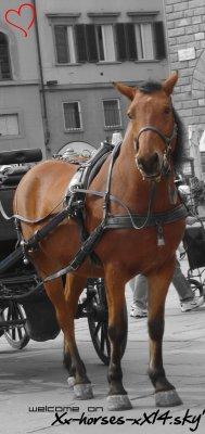 Xx-HORSES-xX
