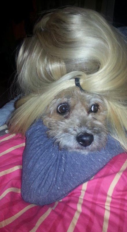 Malice, ou mon amour de chien !
