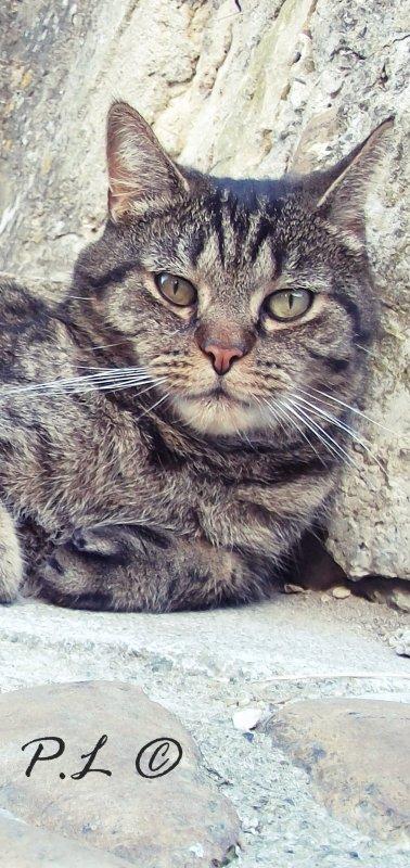 Le son du ronronnement d'un chat contre notre poitrine ....