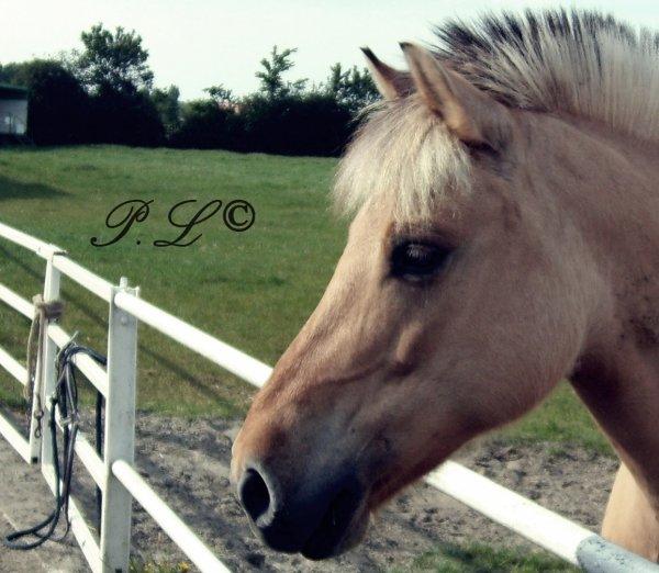 Prendre le temps d'observé un cheval...
