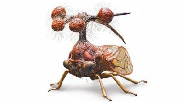 Membracidae du Brésil  Les membracides se nourrissent de sève. Les boules situées au-dessus de leur tête serviraient à capter les sons.