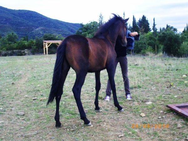 Quoi de plus beau que d'avoir un cheval qui renoncerais a la liberté juste pour étre a mes coté ...