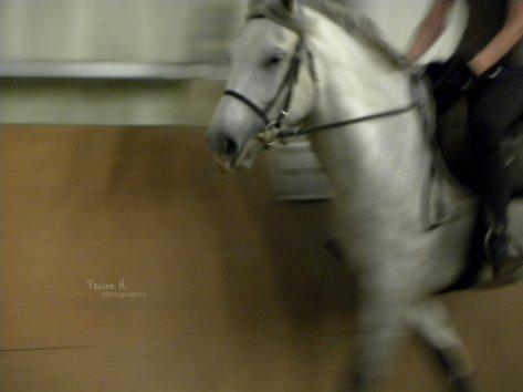 Haras de Maison Blanche - Une jolie histoire qui commence :)