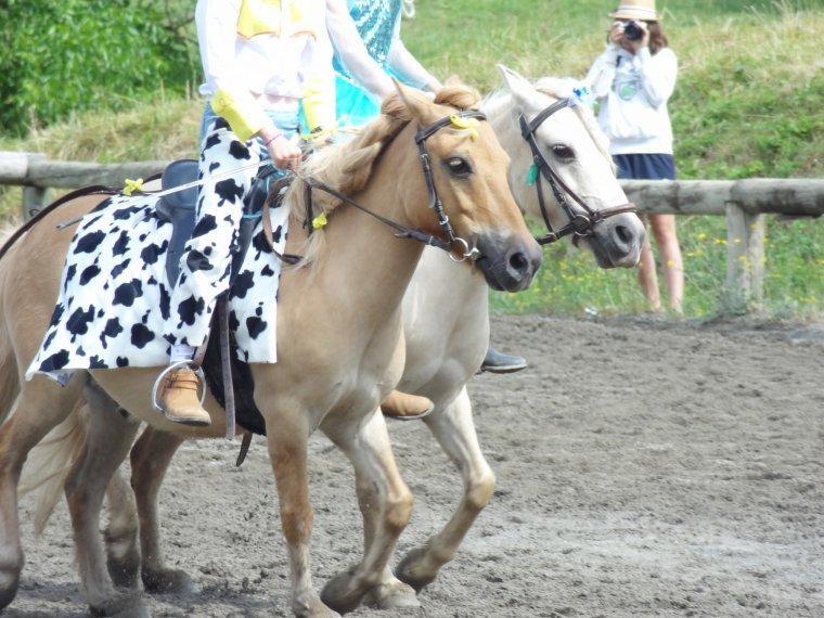 Fête de l'équitation 25/06 (matin)