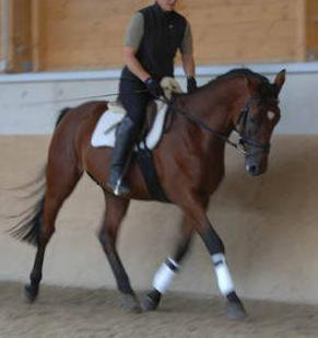 Le dressage est le seul regard entre le cheval et le cavalier qui semble être admirer ♥