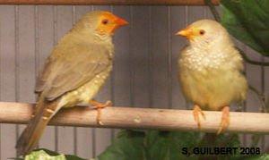Généralités sur les oiseaux :