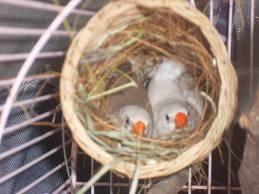 autres oiseaux mes mandarins
