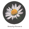 Beauty-Flowers