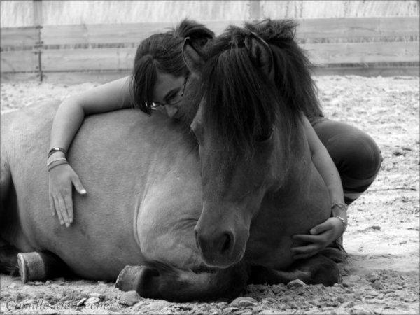 Nora et P'tit Lu, les chevaux de ma vie ...