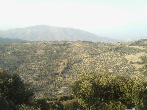 vacance 2012 à Valdepeñas de Jaén