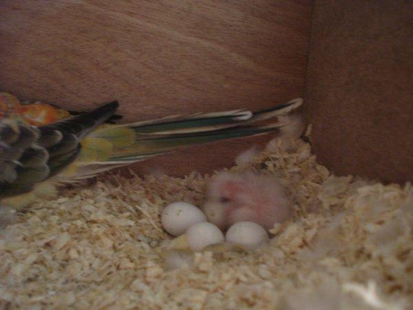 premiere naissances 2011