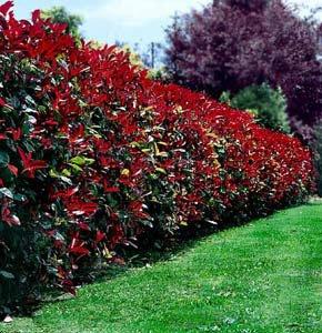Attention !! Les plantes toxiques pour les animaux au jardin ...