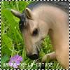 Haras-De-La-Nature