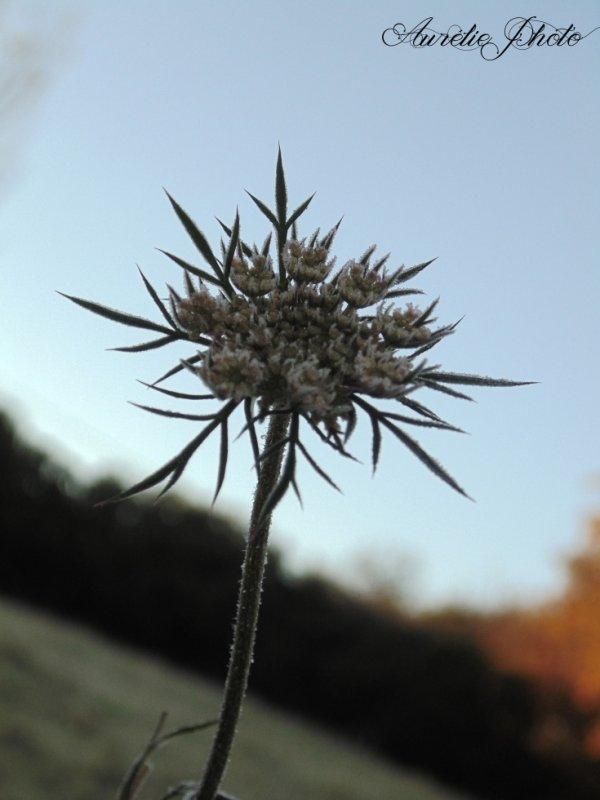 La même fleur prise sous un autre angle