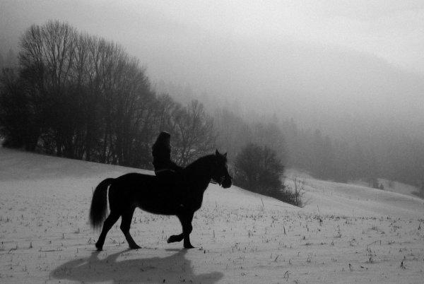 S'il n'existe pas de Paradis pour les chevaux, je veux donc mourrir où ils sont partis.