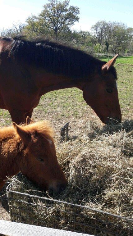 Mes chevaux à moi