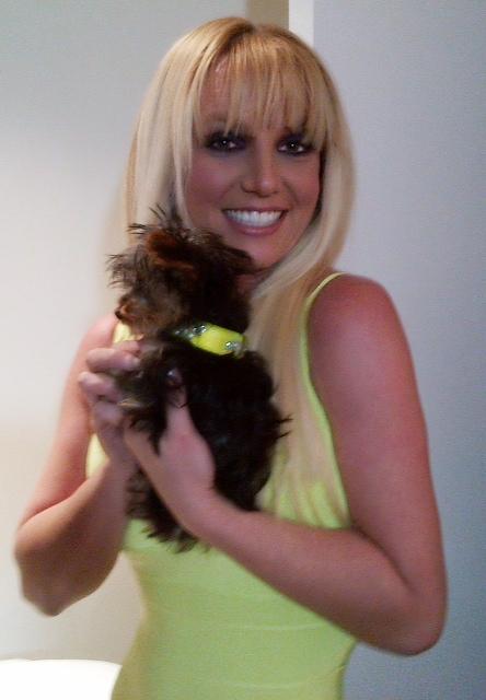 Britney Spears sur le plateau d'X Factor.