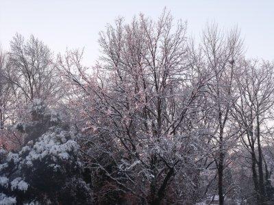 Neige à Draguignan-le 01/02/2012