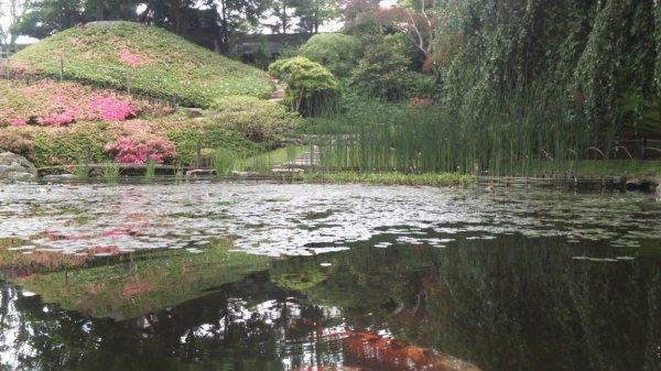 Jardin du Musée Albert -Kahn à Boulogne (92)