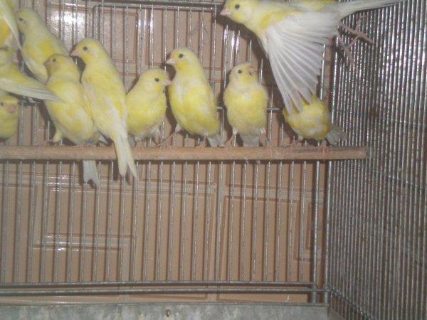 lipos jaunes les 15 selectionnés