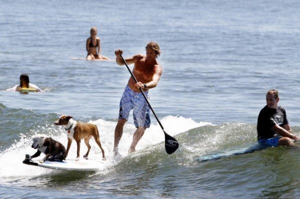 iL SURF avec 2 TOUTOUS !!!!! :-)