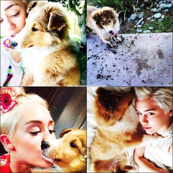 28/06/2014 : Miley a été aperçue faisant du shopping à Los Angeles.  Elle est accompagnée de sa soeur, Noah, et de son nouveau chien, Emu.