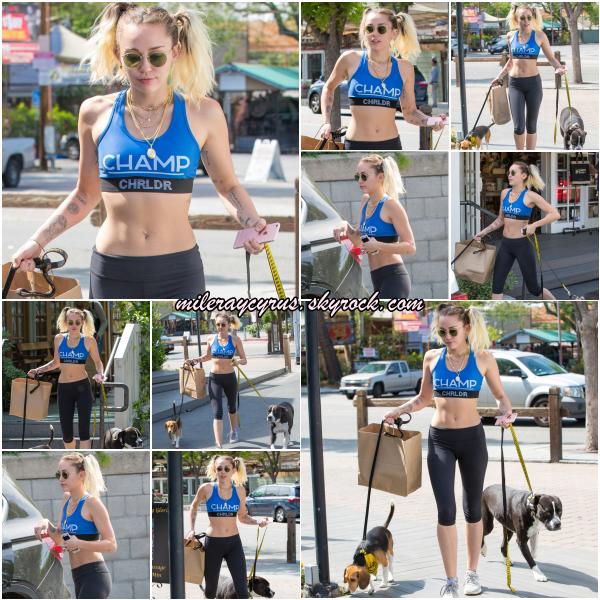 07 AVRIL 2017 : Miley, son corps parfait et ses chiens se promenant à Calabasas, en Californie.