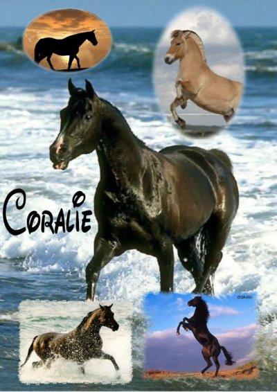 montage chevaux de drakelo