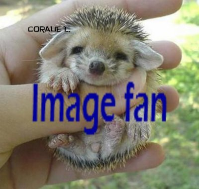 image fan